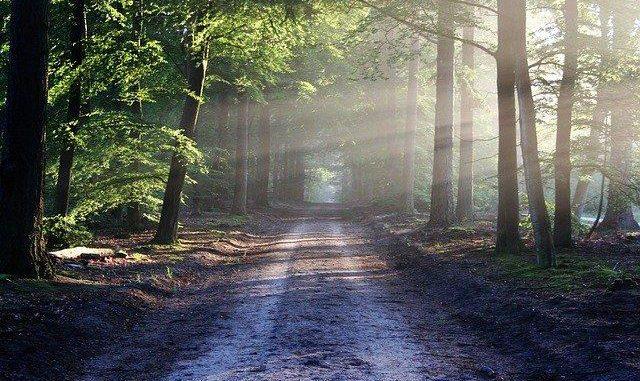 Près de Toulouse, la forêt de Bouconne a nouveau accessible