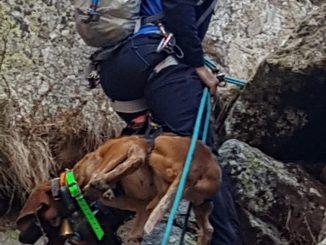 Pyrénées. Les gendarmes sauvent un chien de chasseur
