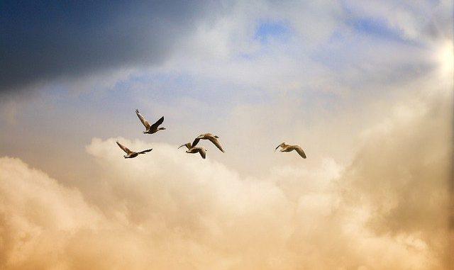 Grippe Aviaire Gers Landes Bigorre